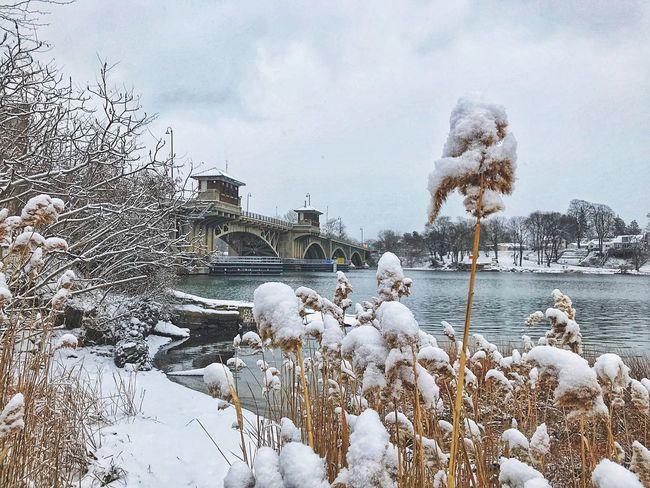 Snowing Snowing Bridge - Man Made Structure Bridge Riverside Winter Cold Temperature Snow Weather Nature Frozen Day Building Exterior Animal Themes Scenics Beauty In Nature Lake No People Architecture Bare Tree Tree Built Structure Sky Water Outdoors