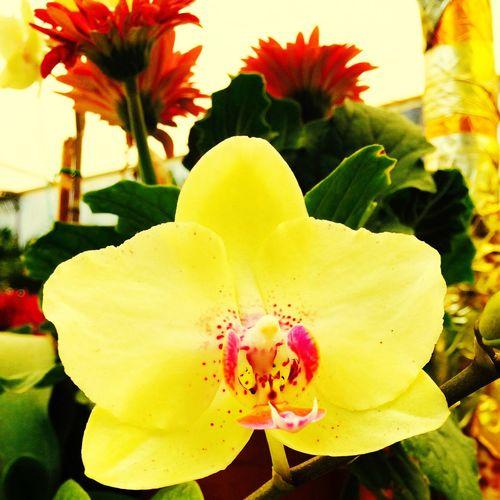 Flowers Saturday Orquídea
