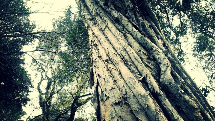 Mobile Photography Trees Taking Photos Enjoying Nature