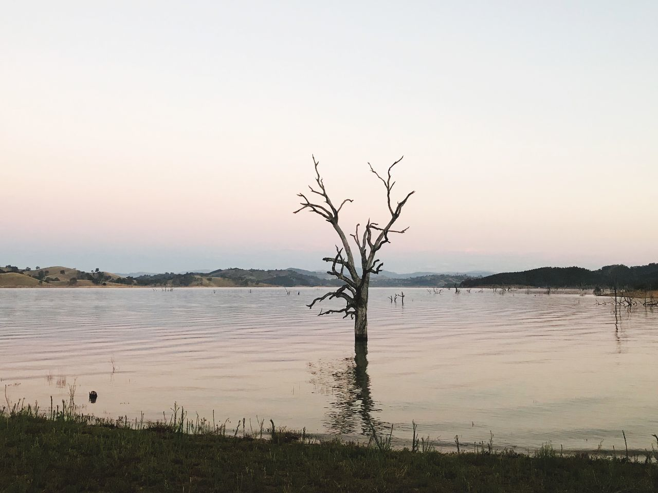 tranquility, bare tree, tranquil scene, nature, outdoors, reflection, tree, beauty in nature, water, lone, lake, scenics, landscape, no people, branch, sunset, clear sky, sky, day