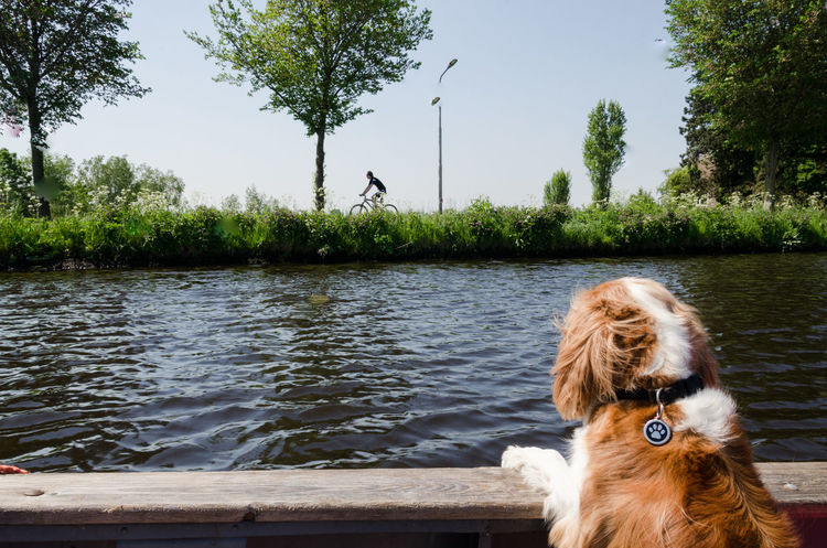 Amsterdam Canal on boat with dogs, Amstel River Amsterdam Amsterdam Canal Amsterdam City Cavalier King Charles Spaniel Dogs Abcoude Amsterdamcity Amsterdamse Grachten Boat Boats Canine Day Dog Domestic Domestic Animals Mammal Oude Kerk Outdoors Pets Water Westie White Dog #FREIHEITBERLIN