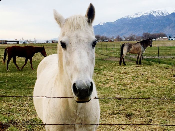 Horses in ranch