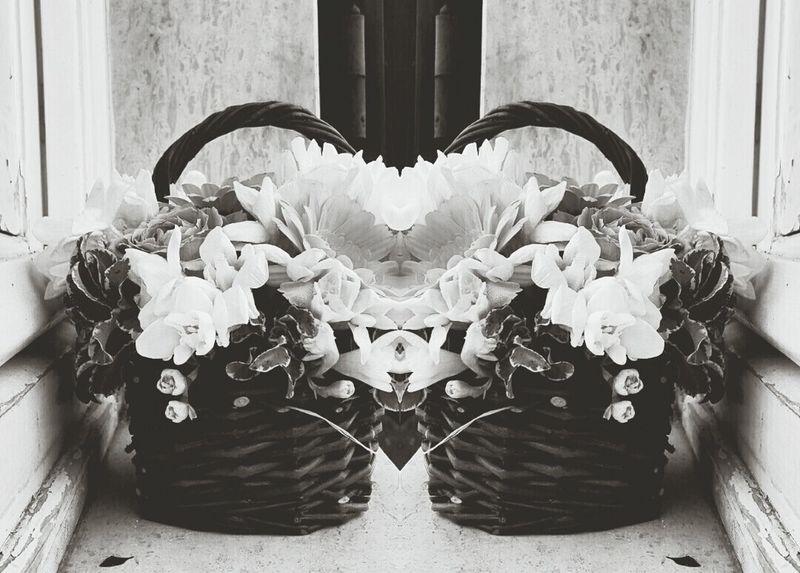 Black & White , Flower, Nature & Beauty
