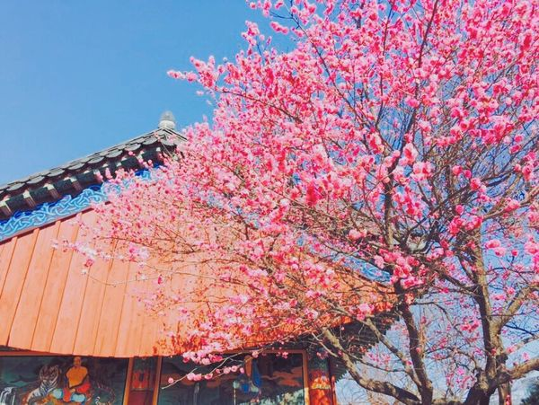 South Korea Temple IPhoneography Flowers VSCO Cam Vscoflowers Daily