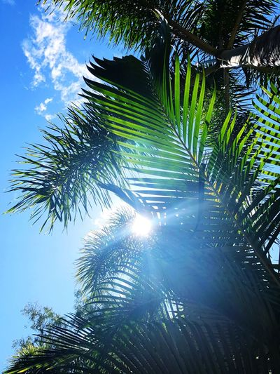Low angle view of palm trees against sky