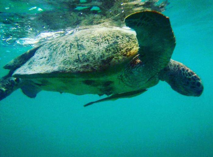 Turtle Malaysia