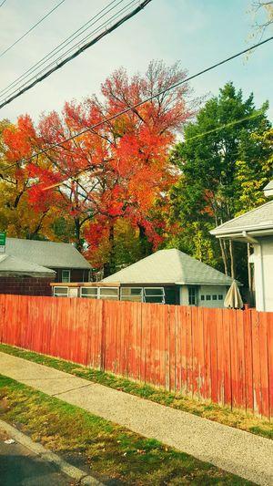 Fall Colors Fallcolo Fall Leaves Lastsummerdays Statenisland Naturelove