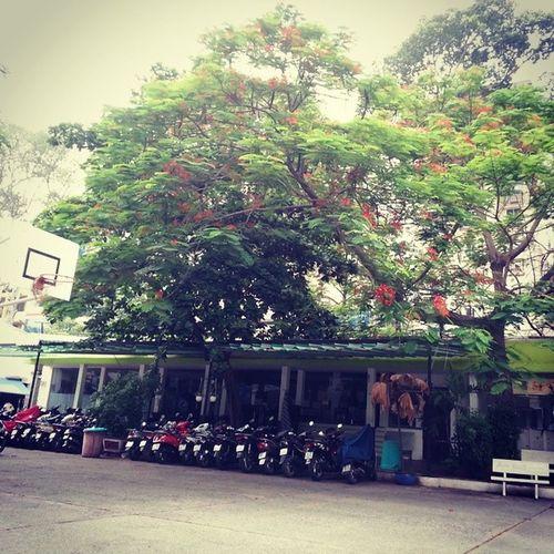 A cloudy day Schoolyard Monday Lastshoolyear