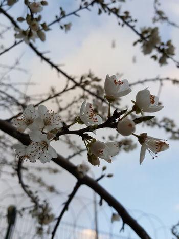 Springtime Nature çiçek Bahardalı Flower Spring Flowers