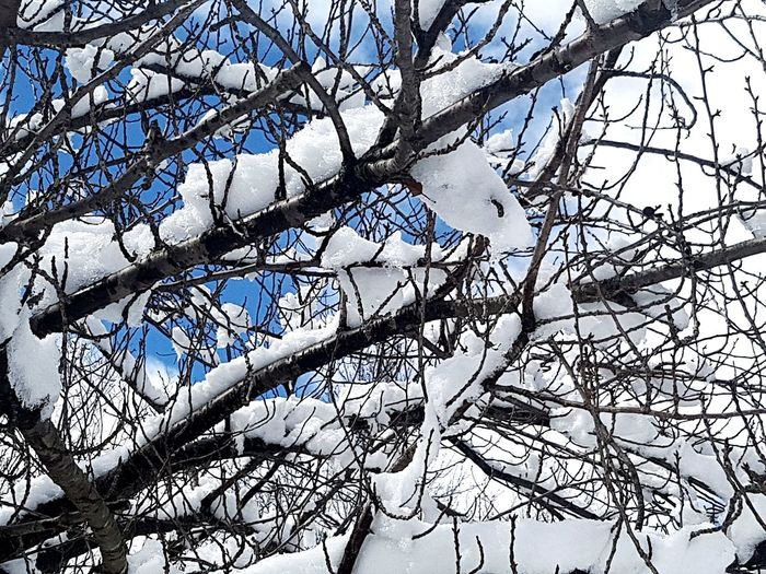 Tree Branch Bare Tree Backgrounds Winter Full Frame Sky Close-up