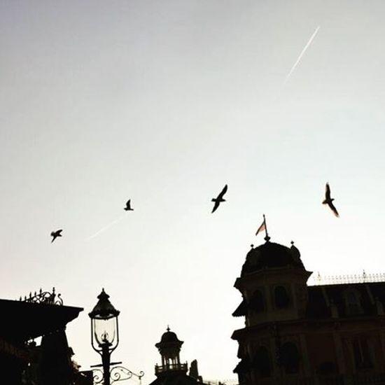 Dans le ciel de Disneyland ✨ Disneylandparis Disneyland Sky Bird Nikon5300 12mars2016