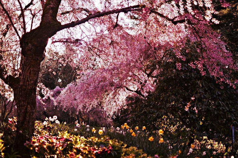 Springtime colours. Pantone Colors By GIZMON EyeEm Nature Lover Colors