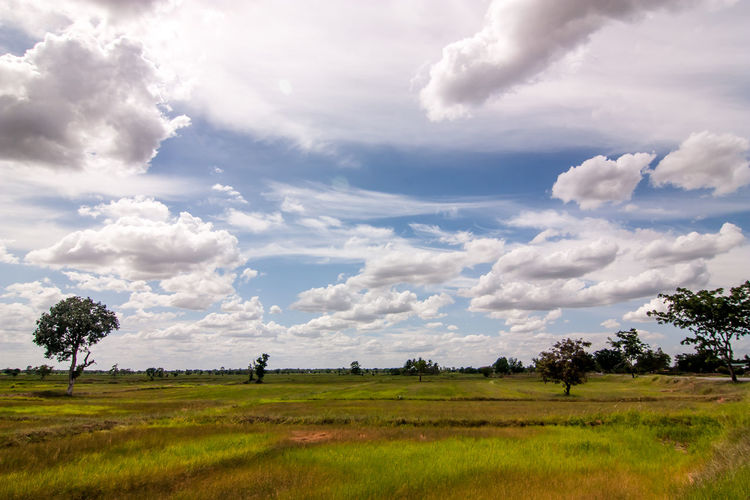 ASIA Cloud Daytime Field Midday Thai Thailand Tree Blue Sky Cornfield Cornfield And Sky Day Daylight Fields And Sky Midday Sun Sky