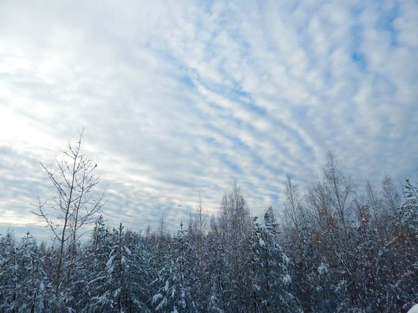 Sky Nature No People Tree Cloud - Sky Growth Beauty In Nature Tranquility Outdoors Low Angle View Bare Tree Day Close-up Landscape Forest Latvia Riga Beauty In Nature Nature Snow