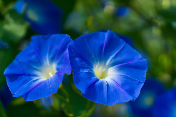 Flower Beauty In Nature Nature Blue Flower Head Freshness Fragility Outdoors Close-up Plant No People Springtime Day Purple Green Color Beauty In Nature Nature Nature