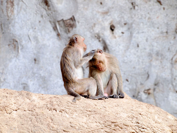 Monkeys sitting on rock
