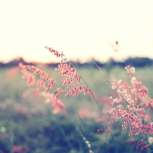 Vintage wild flower in sunset, instagram filter Plant Beauty In Nature Flowering Plant Flower Nature Vulnerability  Growth Fragility Land Field Tranquility Selective Focus Freshness Close-up Day Sky No People Focus On Foreground Tranquil Scene Outdoors Flower Head Softness Vintage Filter