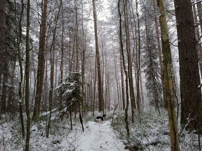 Winter Forest Finland Hyvinkää Jackrussel