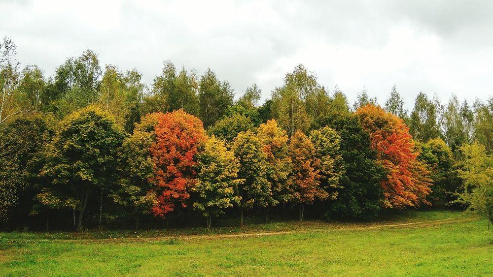 Беларусь, Строчицы Autumn Nature