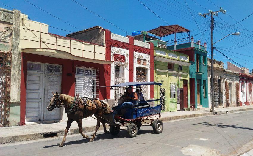Horse cart on street against clear sky