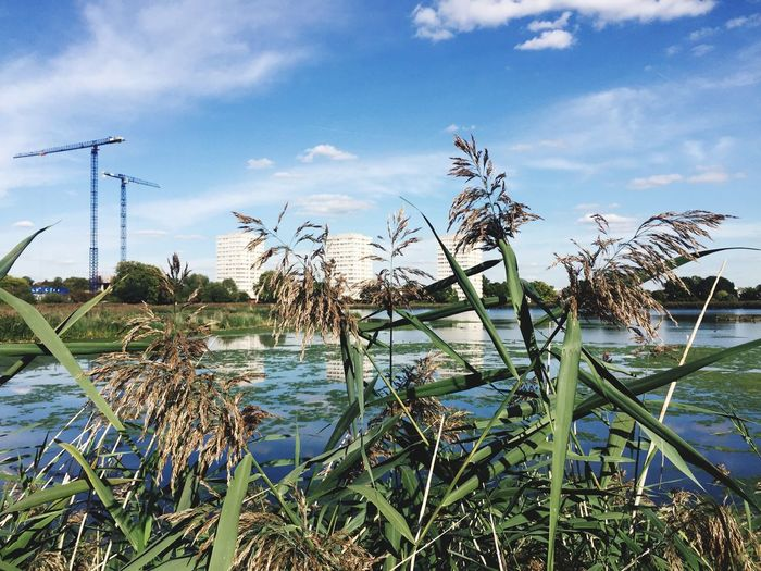 Growth Plant Water Grass Sky Nature Scenics Leaf Close-up Tranquil Scene Blue Tranquility Beauty In Nature Day Growing Outdoors Cloud Green Color Non-urban Scene Cloud - Sky Hackney London IPhone Woodberry Wetlands