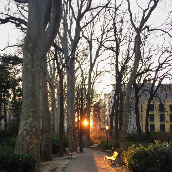 Sunset Iphonephotography IPhoneography IPS2015Trees TriesteSocial EyeEm Trieste