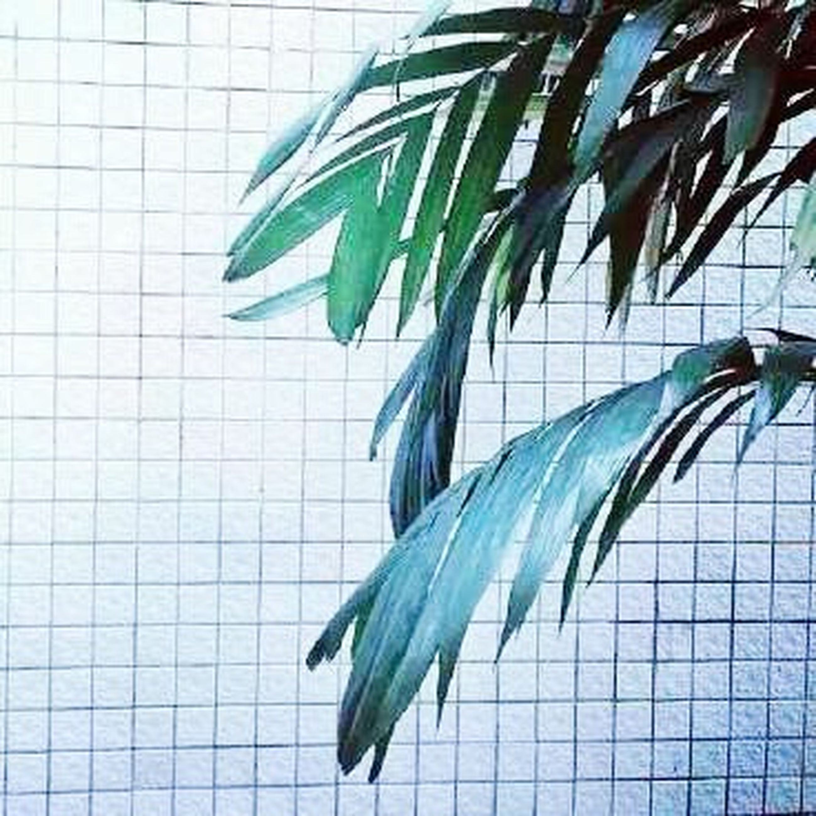 leaf, indoors, green color, potted plant, plant, close-up, no people, wall - building feature, growth, pattern, green, day, still life, freshness, window, wall, leaves, high angle view, nature, built structure