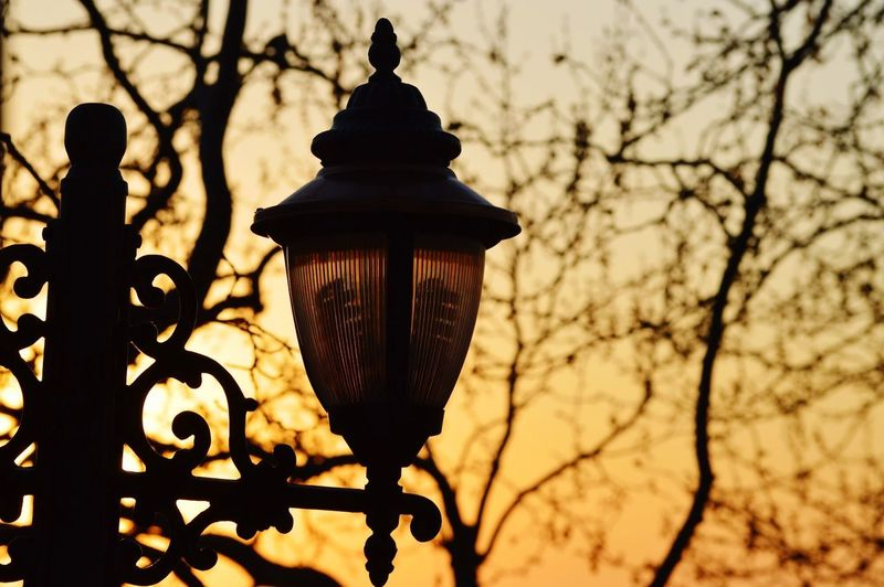 Lighting Equipment Low Angle View Lantern Tree Nature Street No People Focus On Foreground Silhouette Electric Lamp Sky Branch Street Light Illuminated Outdoors Bare Tree Day Sunset Plant Dusk