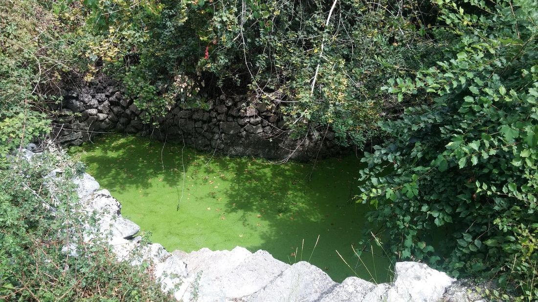 Roman well High Angle View Nature Outdoors Day No People Green Color Water Growth Beauty In Nature Tree Well  Bosnia And Herzegovina Nature Built Structure Historic Roman