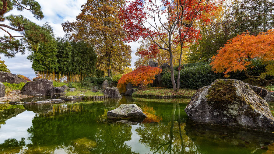 Japanese garden in Bietigheim-Bissingen Water Tree Autumn Plant Lake Beauty In Nature Nature Reflection Change Tranquility Rock Growth No People Rock - Object Solid Scenics - Nature Waterfront Tranquil Scene Outdoors Autumn Collection Japanese Garden Bietigheim-Bissingen Sea Colors Orange Color