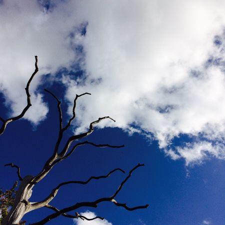Jaunpils Tree Sky Sky And Clouds Clouds
