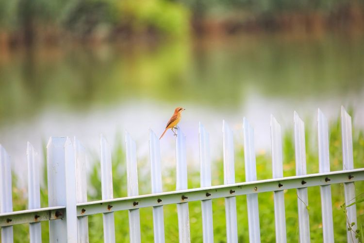 View of an insect on wooden fence