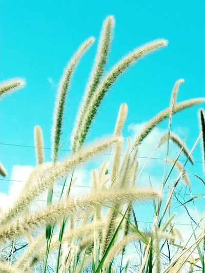Nature's Fuzzy Plants Premium Collection Fuzzy Plant Backgrounds Full Frame Close-up Sky Plant Blooming Growing
