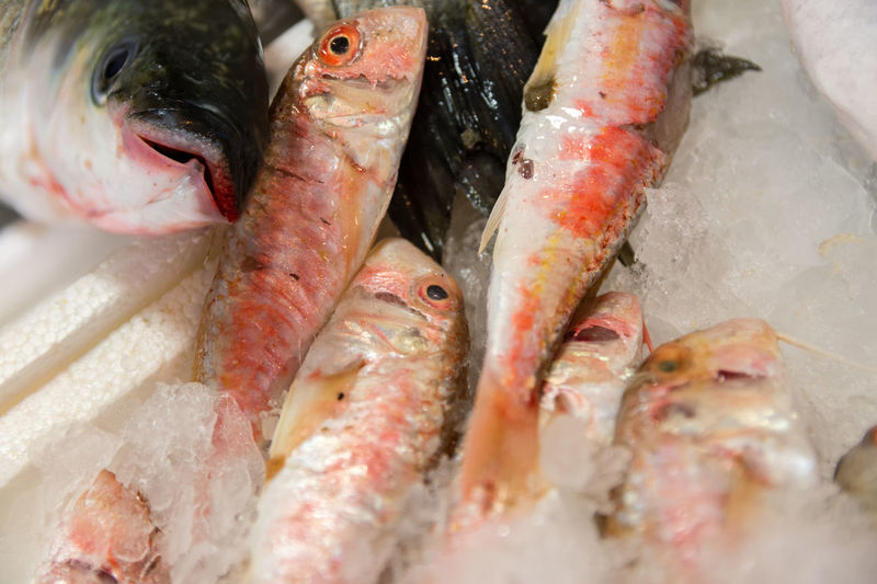 Close-Up Of Freshly Caught Striped Red Mullet Or Mullus Surmuletus On Ice For Sale In The Greek Fish Market Food And Drink Frozen Ice Market Mediterranean Food Mullus Fish Red Seafood Animal Close-up Fish Fish Market Fishing Food Freshly Caught Greek Food Healthy Eating Market Stall Mullet Mullet Fish Mullus Surmuletus Raw Food Red Fish Red Mullet Saltwater Fish
