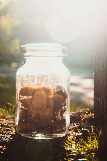 Close-up of glass jar with dog treats on sidewalk