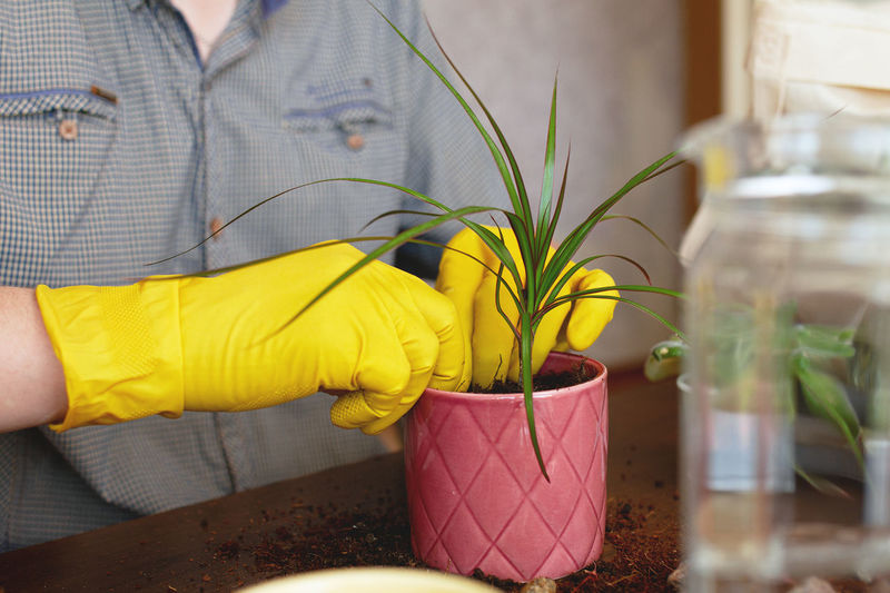 Close-up of woman holding potted plant at home