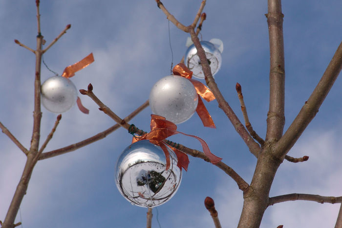 Branch Christmas Close-up Day Nature No People Orange Outdoors Silver Balls Sky Tree