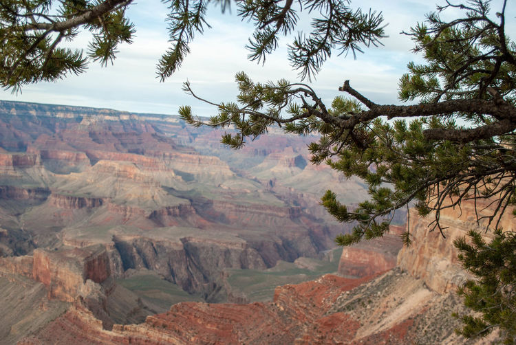 Grand Canyon South Rim Landscape Environment Mountain Tree Scenics - Nature Plant Sky Beauty In Nature Nature Tranquil Scene No People Tranquility Day Land Outdoors Travel Destinations Non-urban Scene Travel Valley Growth Eroded Grand Canyon South Rim