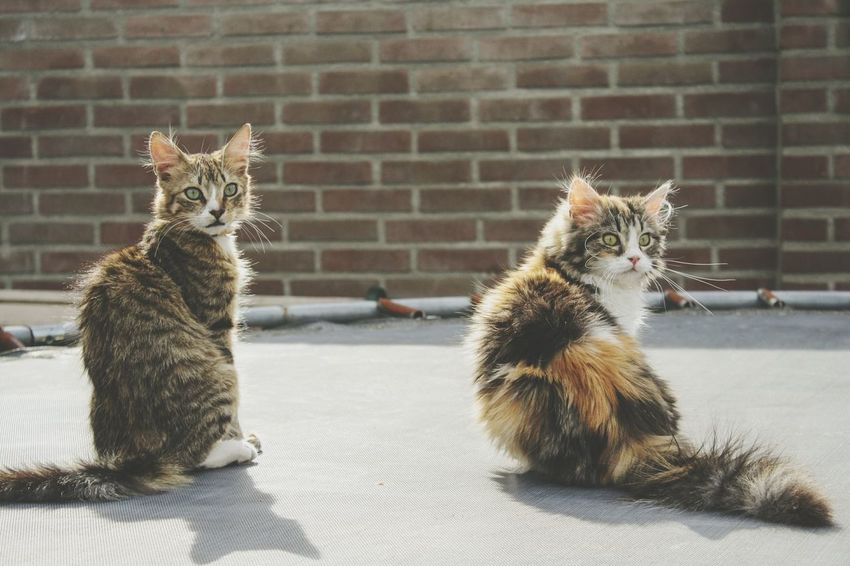 Beauty In Nature Kitten Kittens Cute Photography Cat Photography Portrait Animal Themes Animal Cats Of EyeEm Meow Hello Spring EyeEm Selects Pets Close-up Brick Wall Kitten Domestic Cat Young Animal Cat Tabby Cat Feline Tabby Whisker