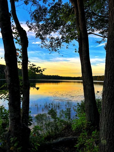 Water Tree Tranquility Plant Beauty In Nature Lake Tranquil Scene No People Nature Trunk Growth Sunset Sky Reflection Idyllic Outdoors Tree Trunk Non-urban Scene Scenics - Nature
