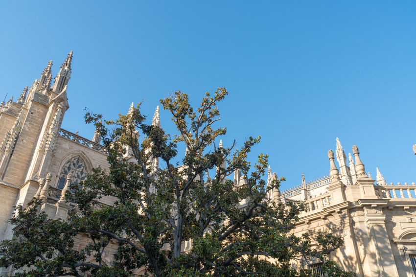 Cathedral in Sevilla Architecture Belief Building Building Exterior Built Structure Clear Sky History Low Angle View Nature No People Ornate Outdoors Place Of Worship Plant Religion Sky Spirituality The Past Travel Tree