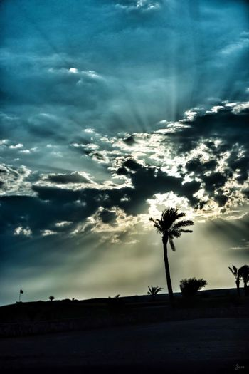 Nature Sky No People Beauty In Nature Scenics Cloud - Sky Sunset Tree Outdoors Landscape Samsung NX500 Samsungphotography Jeangsé Travel Destinations Sunlight Travel Photography Nature Beauty In Nature Tranquility Egypt Live For The Story Perspectives On Nature
