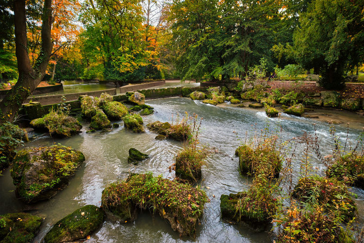Scenic view of stream in forest during autumn