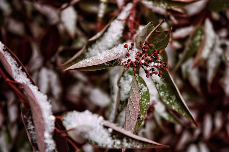 Leaves Snow