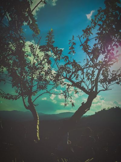 Tree on hillside 🌳 Tree Plant Beauty In Nature Tranquility Sky Nature Branch Tranquil Scene Scenics - Nature Outdoors Blue Silhouette Cloud - Sky Day
