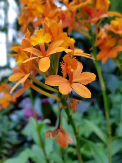 A Bundle of Beauty Nature Photography Nature Beautiful Natural Beauty Flower Head Flower Leaf Petal Orange Color Close-up Plant Blooming Blossom In Bloom Plant Life
