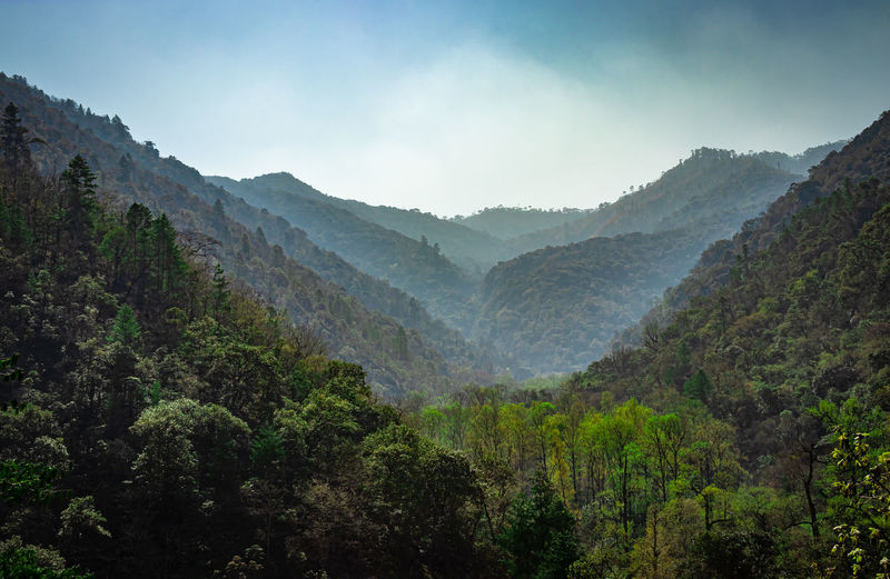 Mountain valley covered with dense forest and blue sky at morning from flat angle