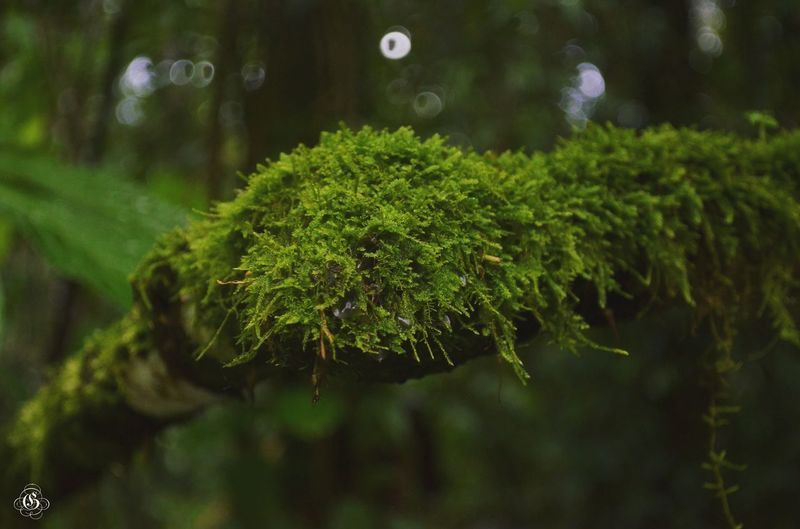 Moss Adventure Nature Naturelovers Nature Photography Forest Photography Forest Life National Park Gunung Gede Nikon Nikonphotography GilPhotograph Nationalgeographic Natgeo