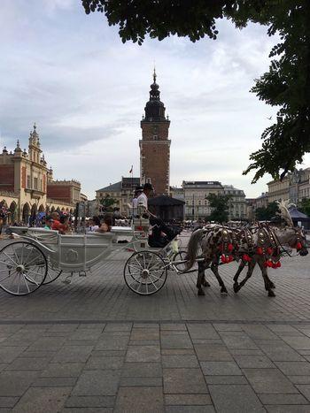::: Coach Enjoying Life Main Square Summer Holidays Horse Krakow Travel Old Town