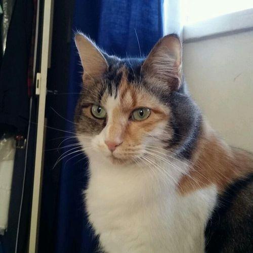 Calicocat Pretty Lady Eyeem South Africa
